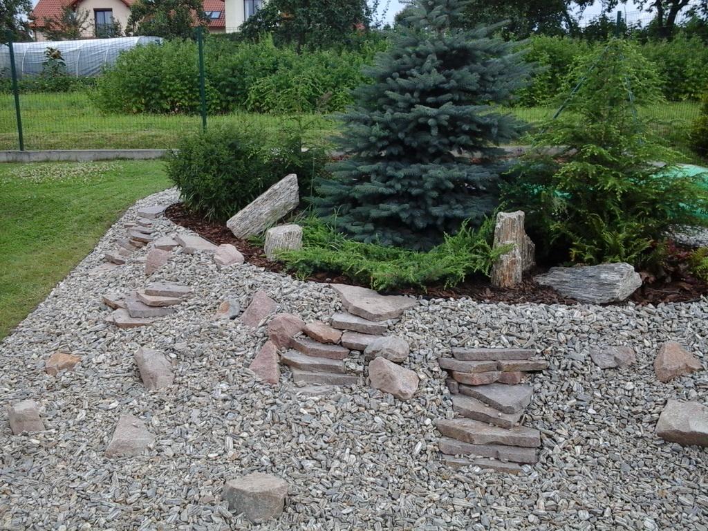 skalniak ogrodowy bibice małopolskie