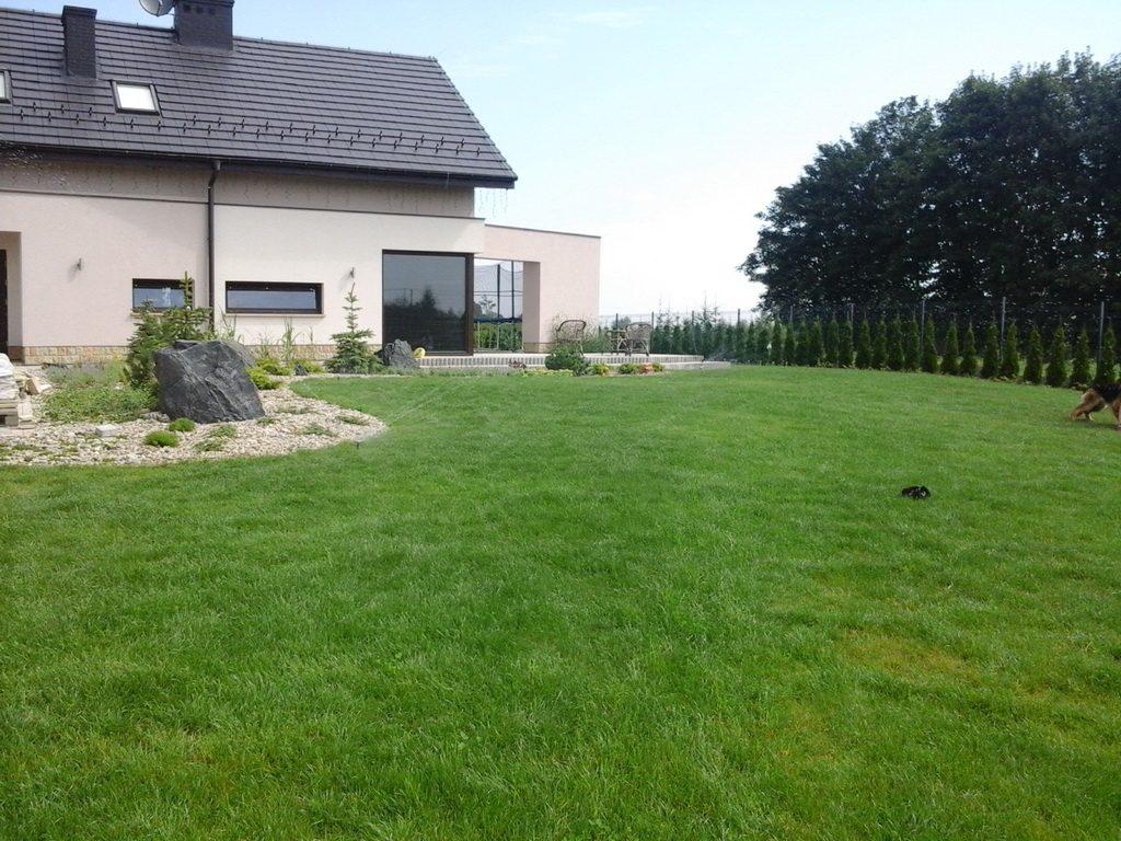 trawnik ogrodowy