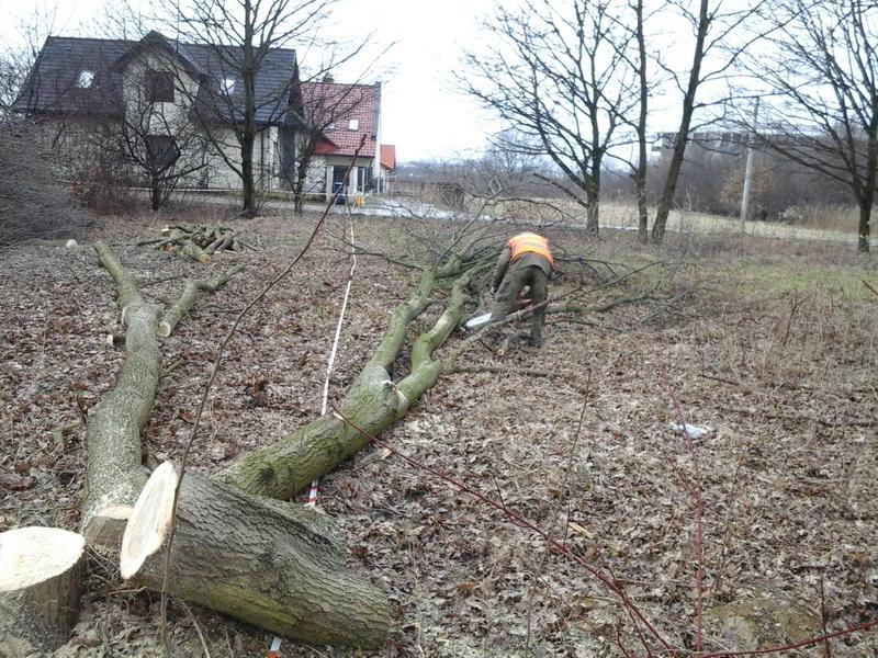 wycinka drzew osiedlowych