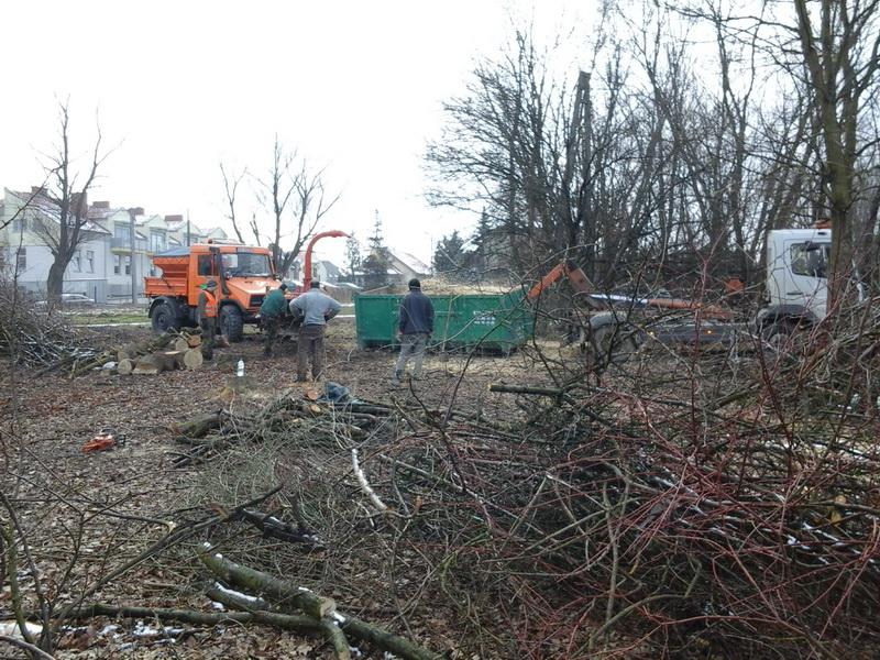 przycinanie drzew osiedlowych