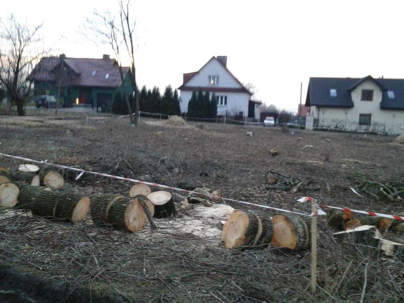 pielęgnacja techniczna drzew