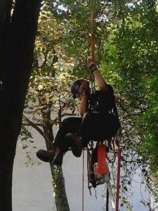 praca na drzewach