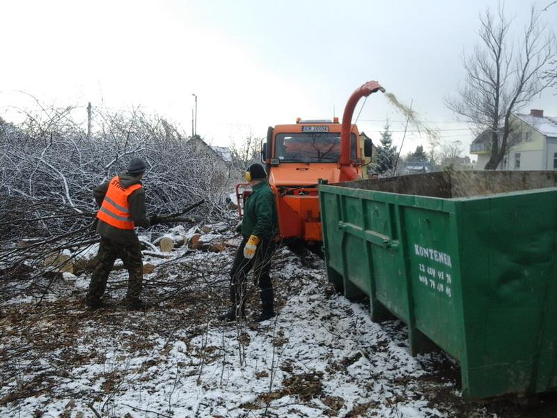 pielędnacja sanitarna drzew