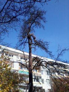 pielęgnacja drzew osiedlowych