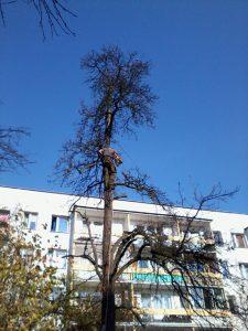 ucinanie gałęzi drzew