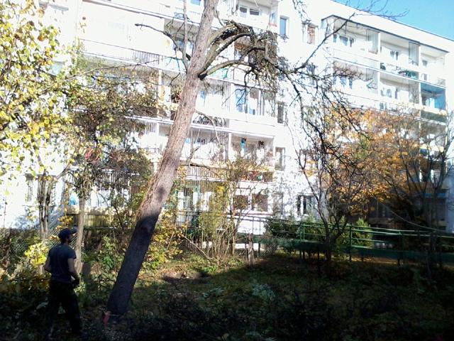 drzewo osiedlowe