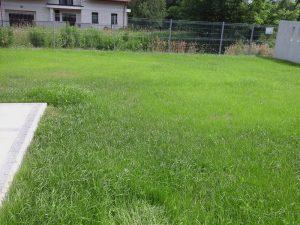 trawnik po 2 tygodniach
