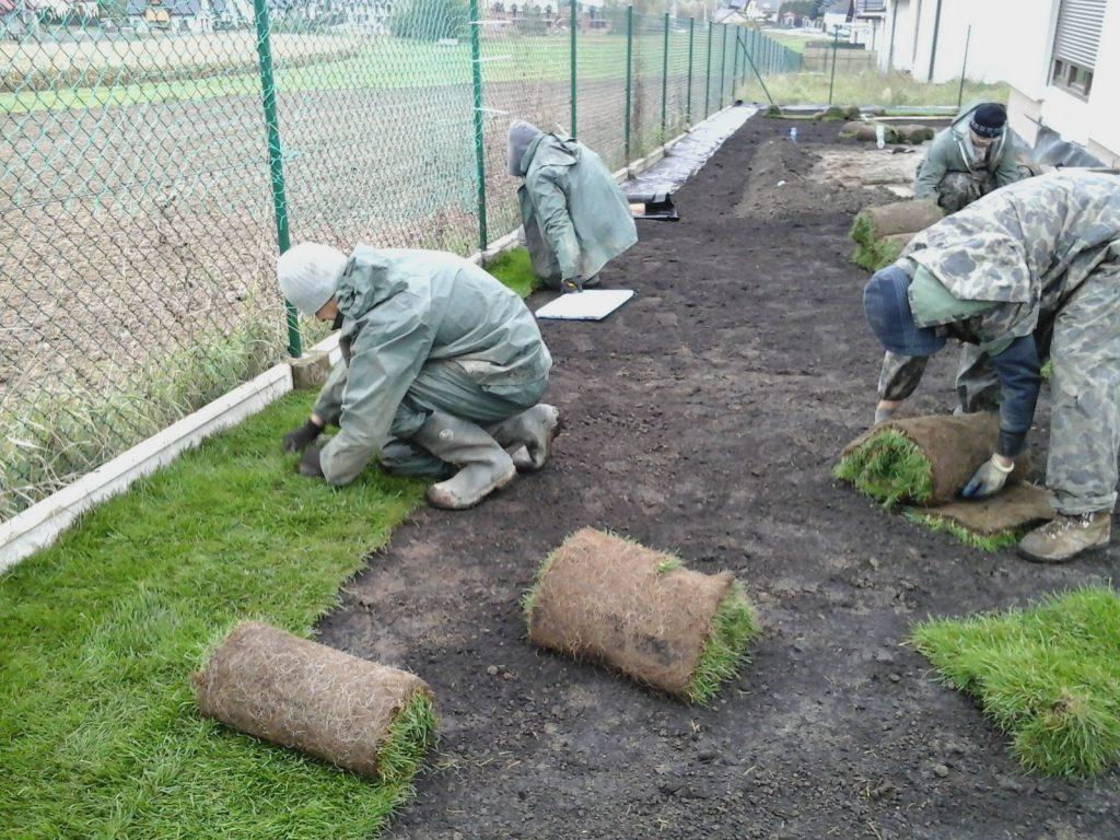 wykładanie trawy z rolki